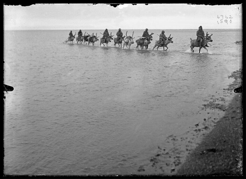 Эвенки на оленях во время перехода через реку. 1901