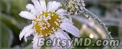 Возможны заморозки — жёлтый код в Молдове