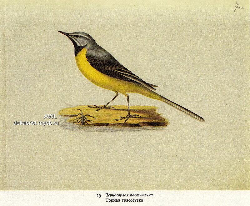 http://img-fotki.yandex.ru/get/9355/19735401.db/0_7ddc7_311a9c15_XL.jpg