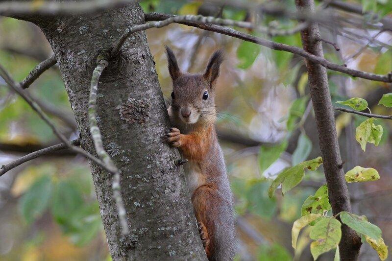 Портрет белочки на дереве IMG_9469