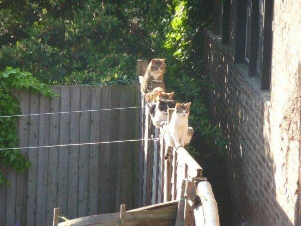Кошачья банда явно что-то замышляет