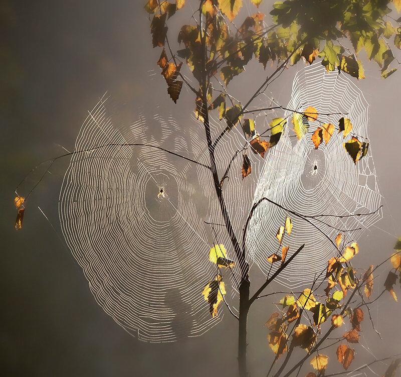 Осенняя пластинка