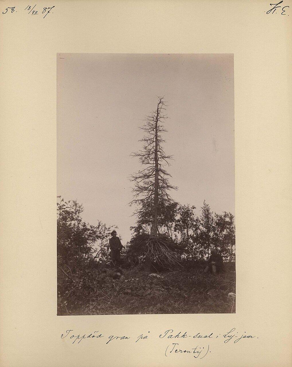 18.7.1887. Погибшие деревья. На фотографии переводчик Терентий