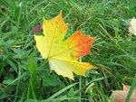 Увы, опадает листва