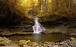 Gold nature (57).jpg