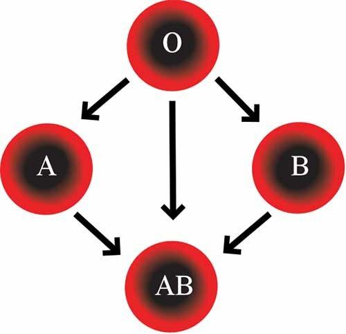 Может ли измениться группа крови?