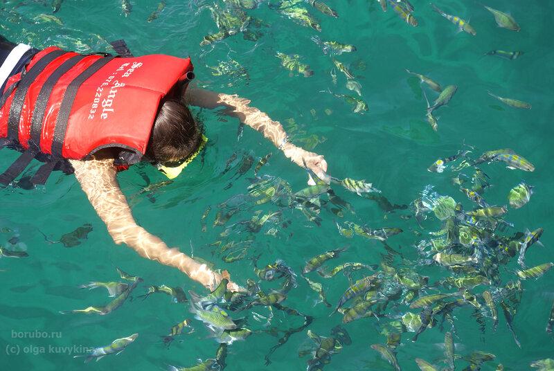 Кормление рыбок в бухте Майя Бэй