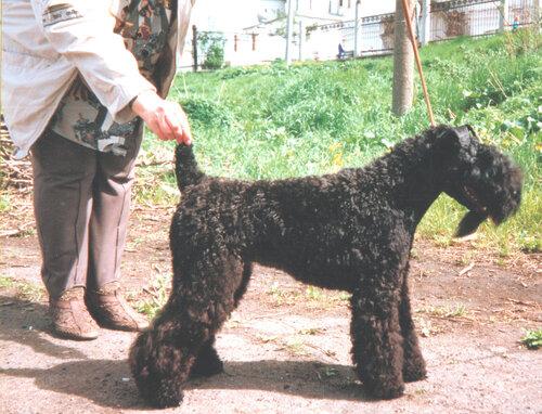 Купидон Реджина (в возрасте до года)