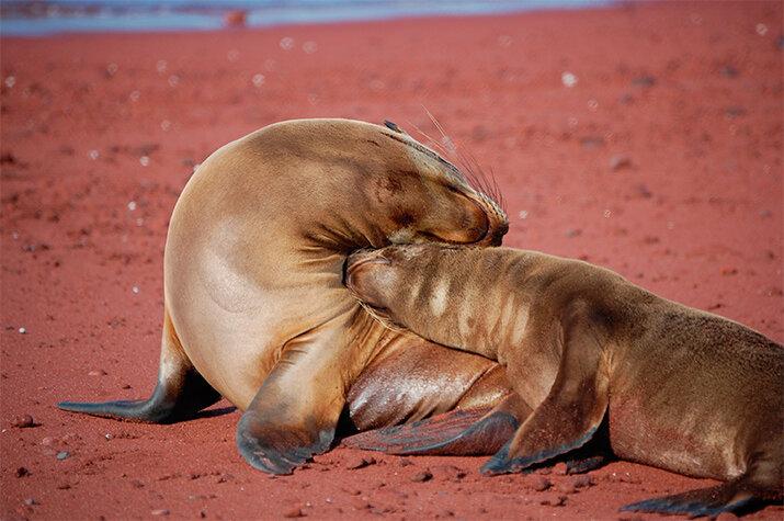 Фото «Материнская любовь и забота в животном мире»