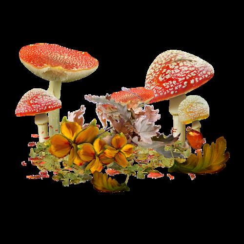 орехи, мухоморы, осень