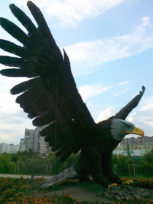 Орел на проспекте Бажана