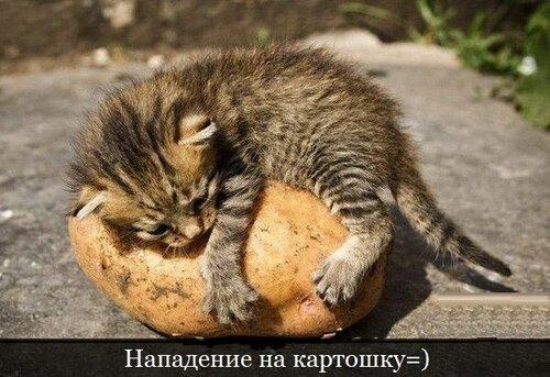 http://img-fotki.yandex.ru/get/9358/7837959.6/0_e535e_6bbaede0_L.jpg
