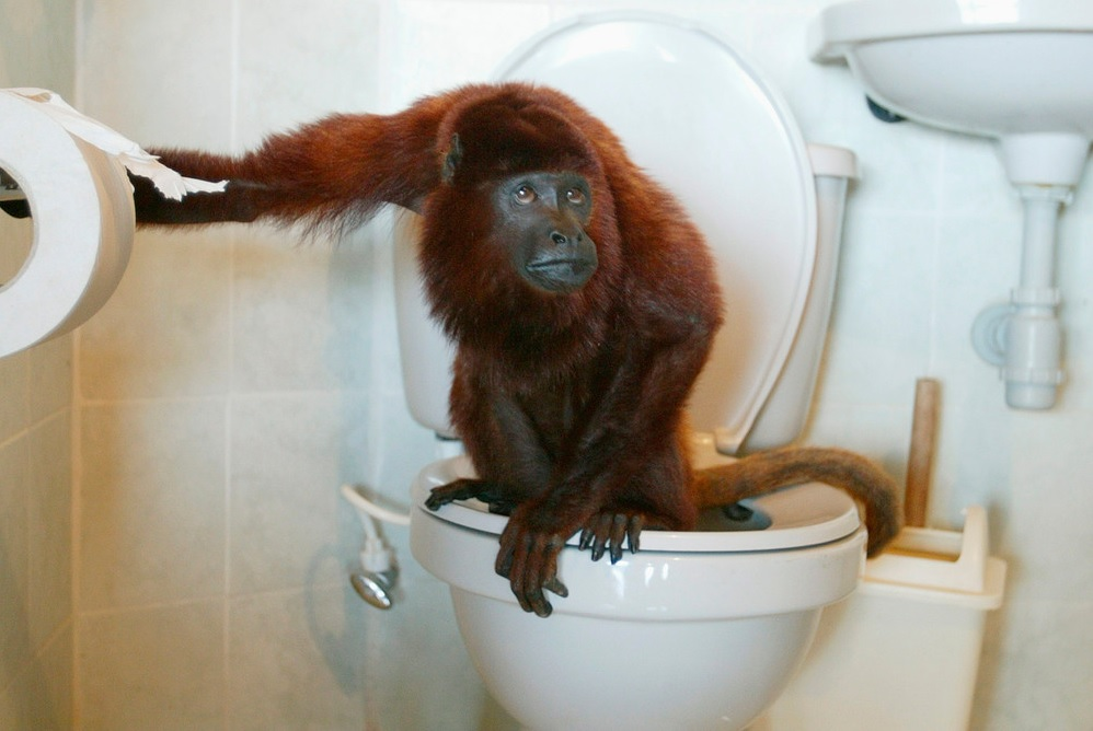 Julian, a pet red howler monkey, uses the toilet in La Pintada, Antioquia province, Colombia February 12, 2007