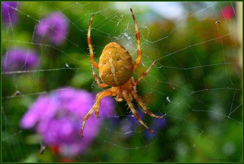 Хозяин паутины...