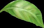 NLD Leaf (2).png