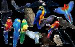 bird_bird_bird_png_format_by_chimonk-d37tayt.png