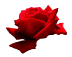 RoseRed by Marina1987 021.png