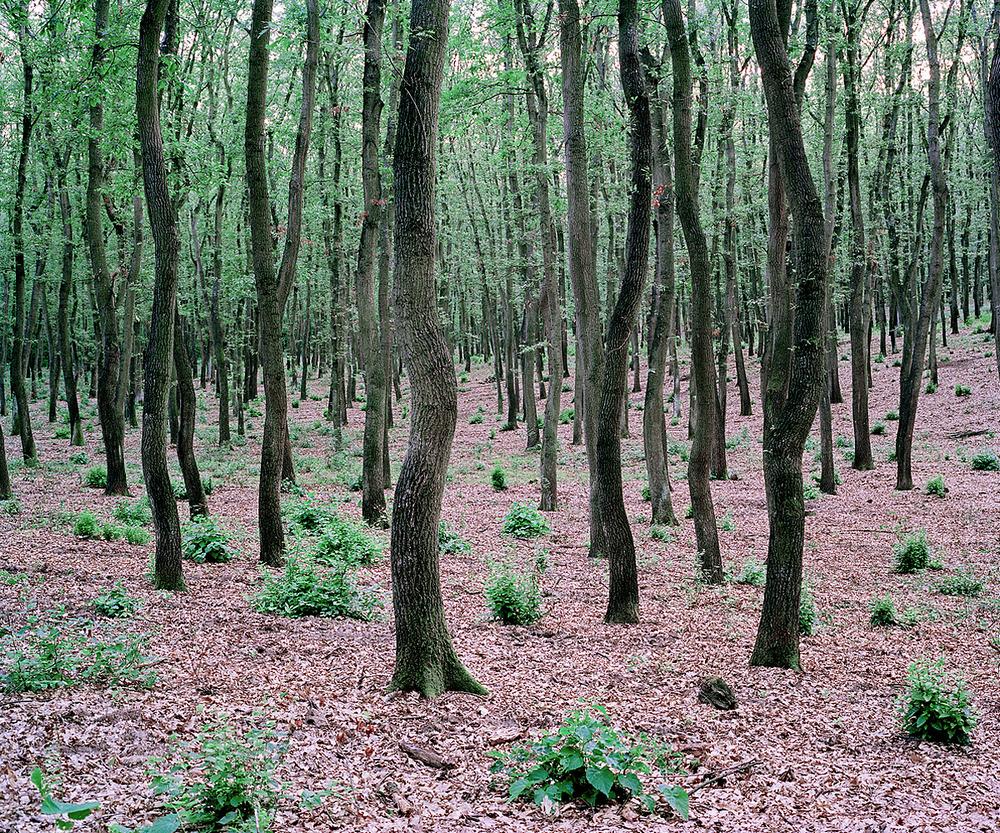 «Зелёная тишина». Фотограф Даниэль Коваловский (13 фото)