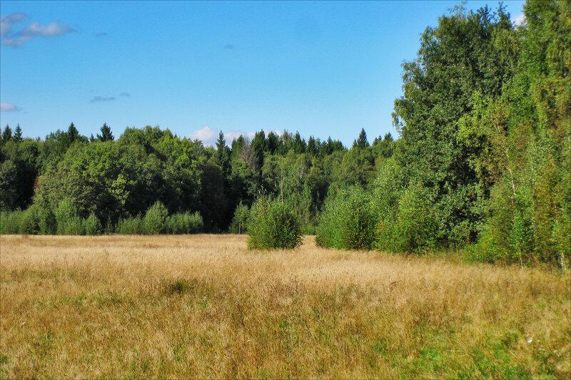 На Протасовском поле