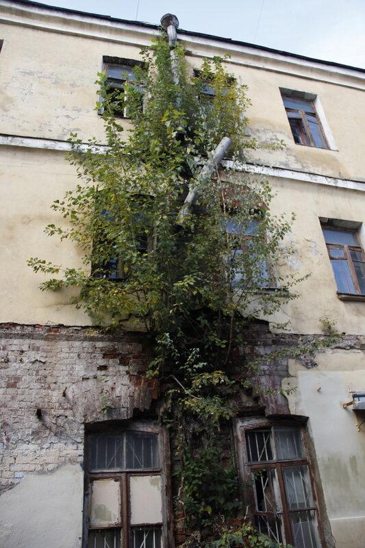 Вертикальное озеленение во дворе  Подколокольного  переулка. 28.09.2013