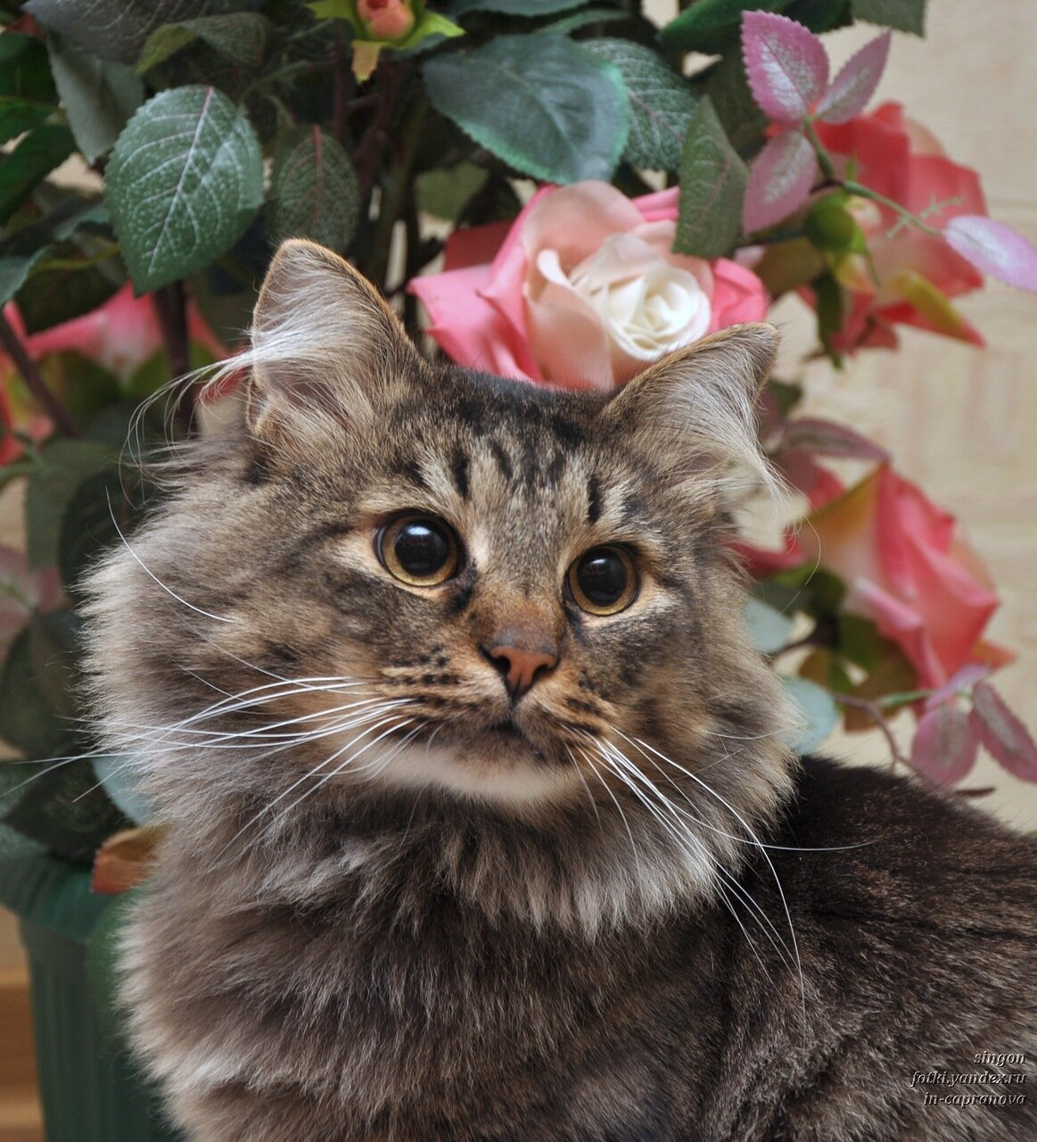 покажи картинки кошек пожалуйста мало кто догадывается