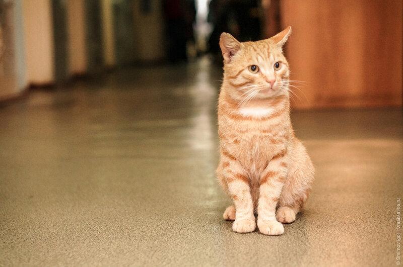 Первым с порога нас встретил кот