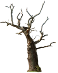 dead_tree_02_png_by_gd08-d4s7iiz.png