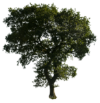 tree_52_png_by_gd08-d4say1q.png