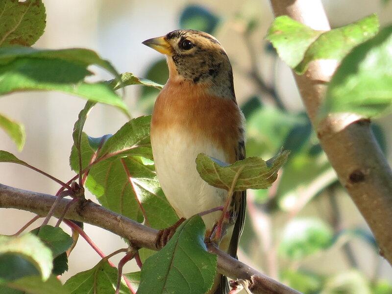 Картинки анимации поющих птичек прилетевших весной