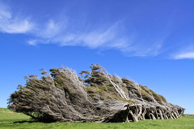 Необычные деревья на мысе Slope Point