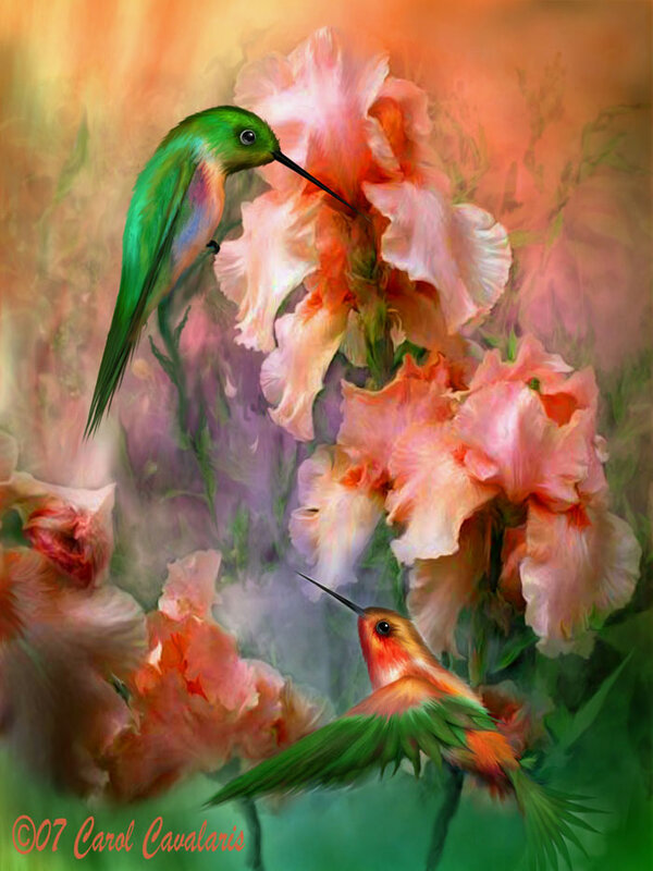 Птичка колибри открытки с днем рождения