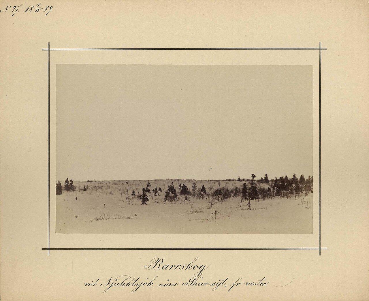 17.4.1889. Хвойный лес, недалеко от деревни на реке Njuhkts