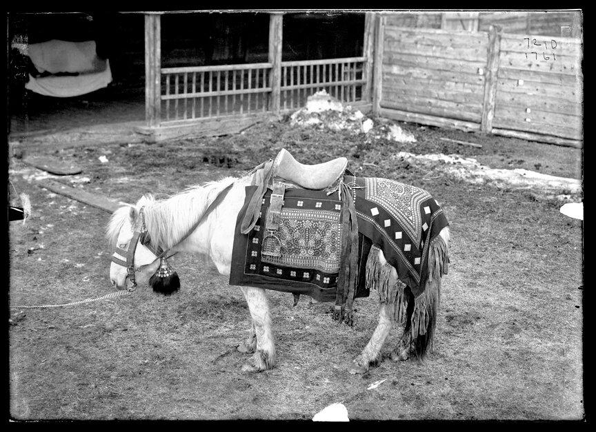 Якутская лошадь под серебрянным седлом, 1902