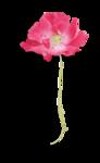 Palvinka_FlowerEssence_flower3sh.png