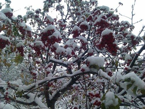 Не первый снег 2013