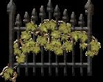 ограда   и   виноград.png