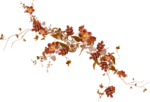 Carena_Autumn Crunch_12.png
