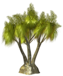 Palms  (2).png