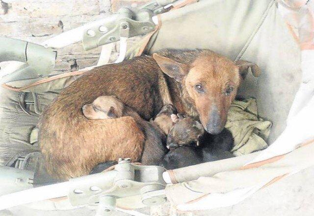 Дворовая собака спасла выброшенного младенца
