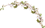 sekada_totheflowers_element(26).png