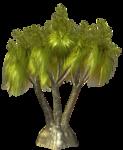 R11 - Palms - 2013 - 002.png