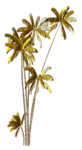 R11 - Palms - 2013 - 3 - 032.png