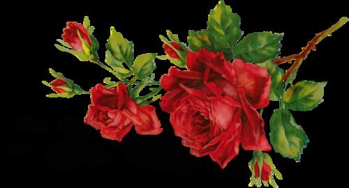 """DesignerScraps: Клипарт """"Алые розы""""."""