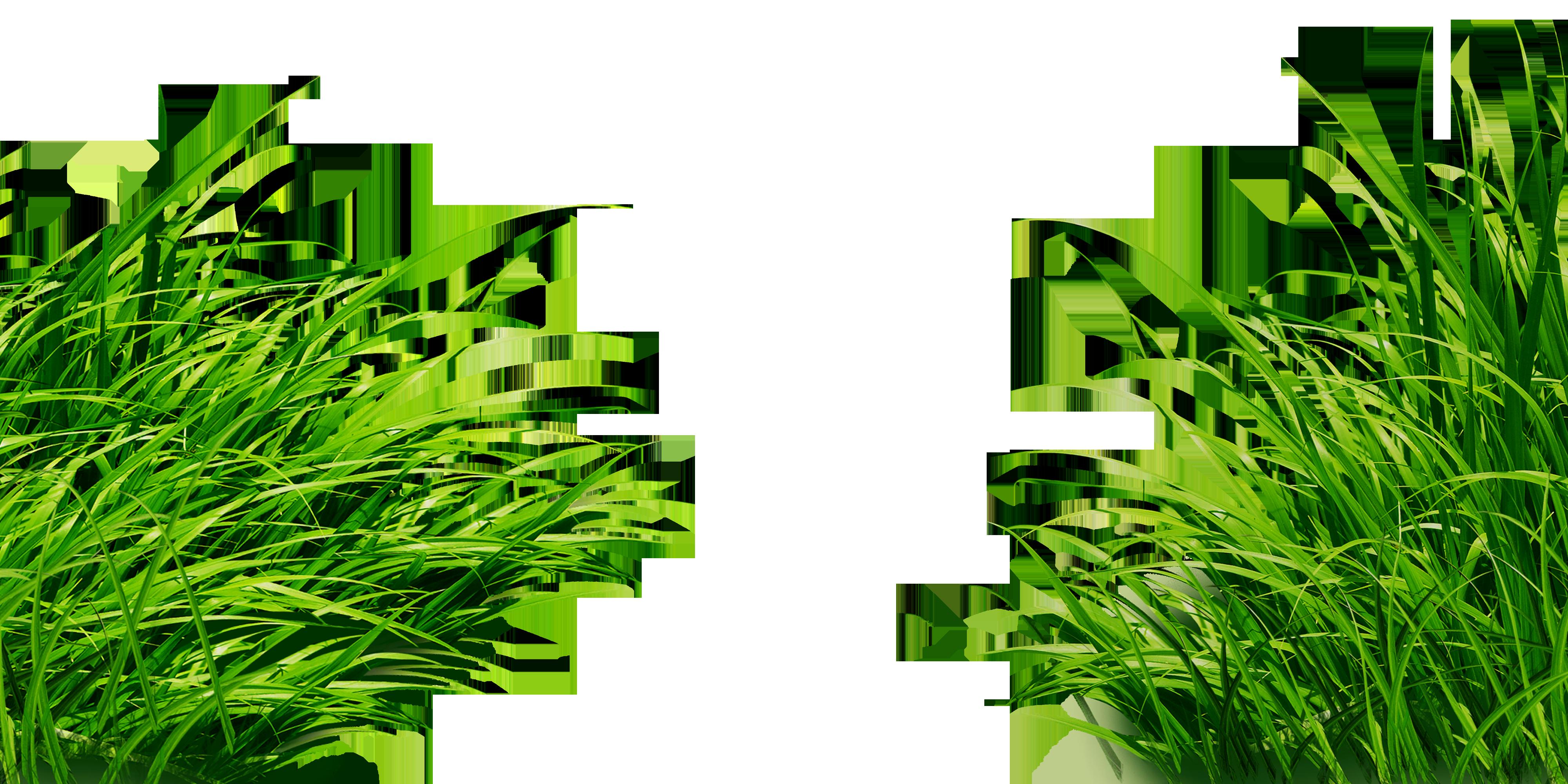 Травы на прозрачном фоне картинка