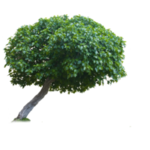 tree_png_by_evelivesey-d3iccql.png