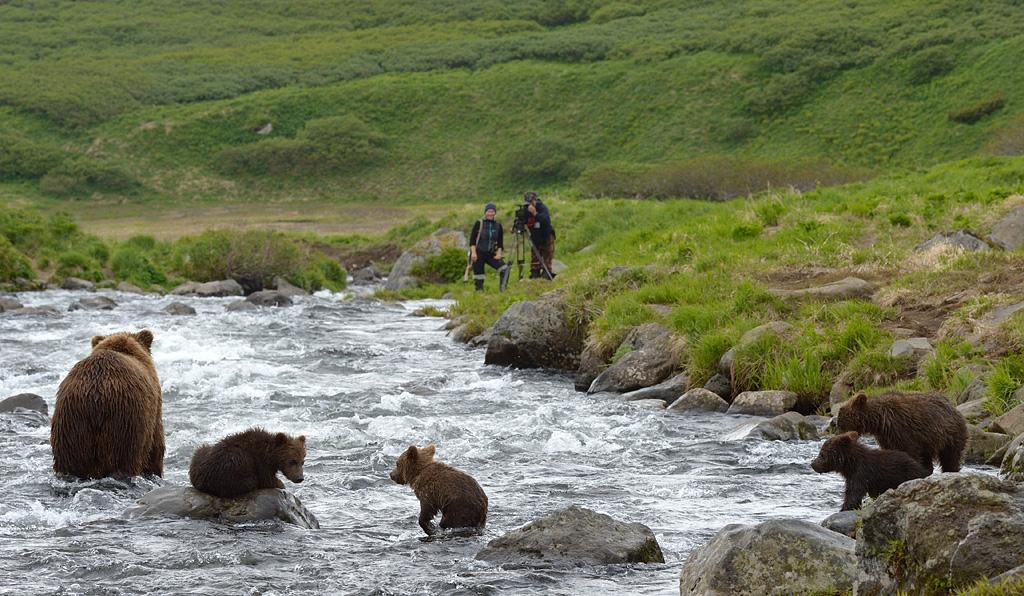 «Оператор ставит на медвежьей тропе или на берегу гоупрошку, чтобы снять зверей с близкого расс