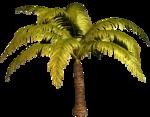 R11 - Palms - 2013 - 015.png