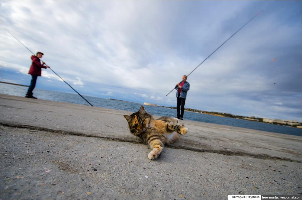 севастопольские котики