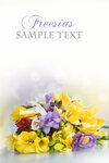 Flower Stockphoto