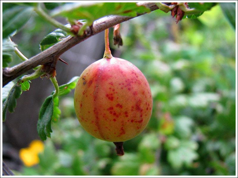 летние ягоды 6